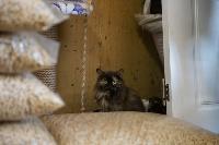 Волонтеры спасли кошек из адской квартиры, Фото: 6