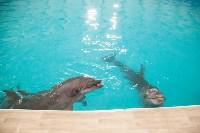 Дельфины, Фото: 13
