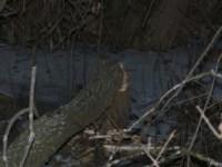 Повалили дерево, Фото: 8