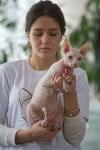 Выставка кошек в ГКЗ. 26 марта 2016 года, Фото: 17