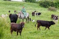 Русское поле фермера Кравцова, Фото: 11
