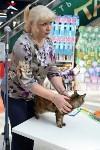 """Выставка """"Пряничные кошки"""" в ТРЦ """"Макси"""", Фото: 71"""