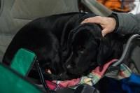 Выставка собак в Туле, Фото: 114