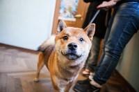 Выставка собак в Туле, 29.11.2015, Фото: 14