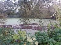 """""""Кровавая"""" вода в пруду в Михалково, Фото: 4"""