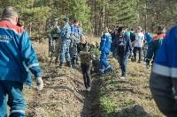 посадка леса в Одоевском лесничестве, Фото: 9