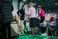 Выставка собак в Туле, Фото: 13