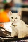 """Выставка """"Пряничные кошки"""". 15-16 августа 2015 года., Фото: 97"""