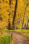 Золотая осень в Туле-2019, Фото: 110