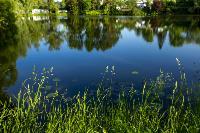Летний день в Ясной Поляне, Фото: 40