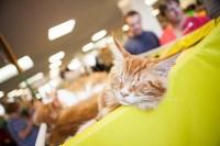 """Выставка """"Пряничные кошки"""". 15-16 августа 2015 года., Фото: 144"""