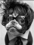 Собачья мода, Фото: 2