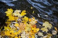 Золотая осень в Туле-2019, Фото: 10