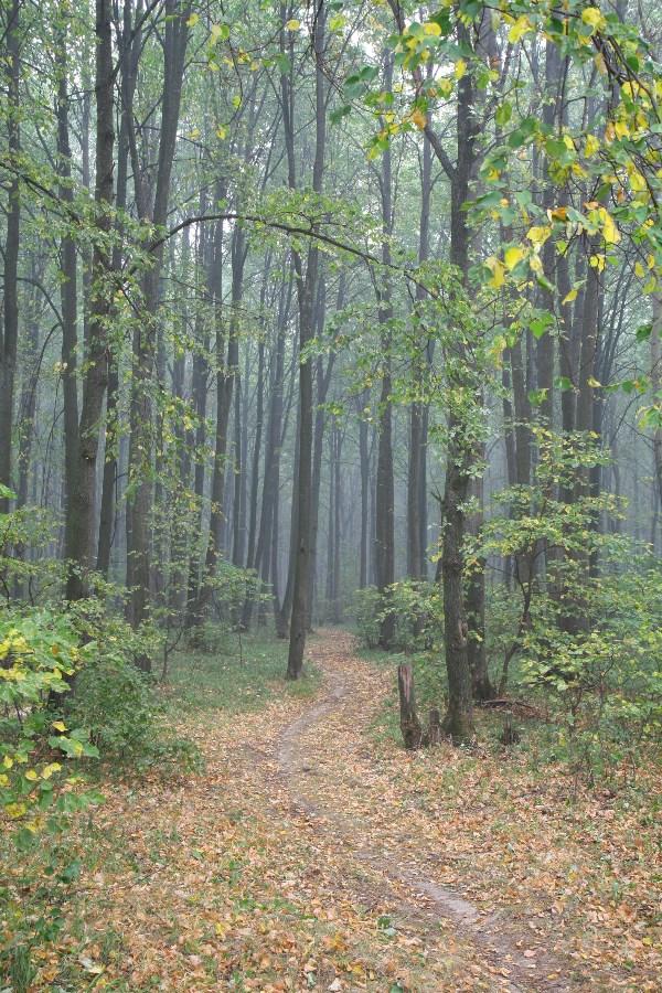 Сентябрь? Нет, 1 августа 2010 года, когда все было в дыму. В лесу тогда досрочно началась осень