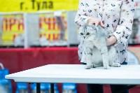 """Выставка """"Пряничные кошки"""" в ТРЦ """"Макси"""", Фото: 29"""
