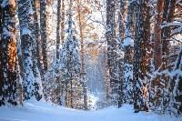 Снежное Поленово, Фото: 68
