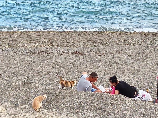 Море, кошки, любовь 💞