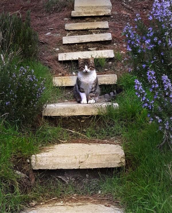 Мартовский ялтинский кот.
