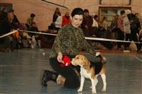 В Туле прошла всероссийская выставка собак, Фото: 51