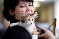 Выставка кошек. 4 и 5 апреля 2015 года в ГКЗ., Фото: 42
