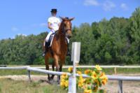 В Ясной поляне стартовал турнир по конному спорту, Фото: 99
