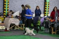 Выставка собак в Туле 14.04.19, Фото: 37