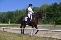 В Ясной поляне стартовал турнир по конному спорту, Фото: 89