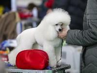 Выставка собак в Туле 14.04.19, Фото: 35