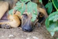 Собаки на тульской метеостанции, Фото: 6