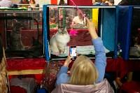 Пряничные кошки, Фото: 50