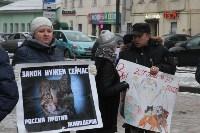 Более 8000 туляков требуют запретить убийство бездомных животных, Фото: 11