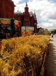 Цветочный джем: Тульское поле в Москве, Фото: 8