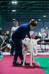 Выставка собак в Туле, Фото: 97