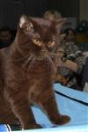 В Туле прошла международная выставка кошек, Фото: 49