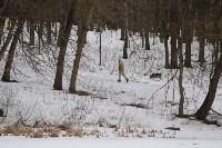 В Центральном парке прошёл рейд по выявлению нарушений выгула собак, Фото: 1