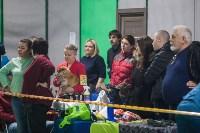 Выставка собак в Туле, Фото: 36