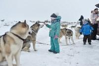 Праздник северных собак на Куликовом поле , Фото: 54