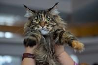 Выставка кошек в ГКЗ. 26 марта 2016 года, Фото: 79