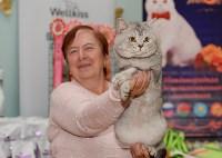 Выставка кошек в Туле, Фото: 19