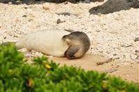 Жизнь тюленя: мечта!, Фото: 3