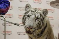 """Цирк """"Максимус"""" и тигрица в гостях у Myslo, Фото: 12"""