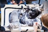 """Выставка """"Пряничные кошки"""". 15-16 августа 2015 года., Фото: 11"""