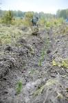 В Веневском районе высажено 24 тысячи сосен, Фото: 9