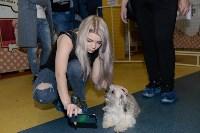 Выставка собак DogLand, Фото: 22