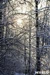 Зимняя сказка Платновского парка, Фото: 20