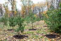 В Центральном парке Тулы появился сосновый бор «Слободы», Фото: 25