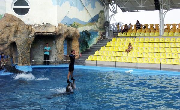 Одесский дельфинарий. 2013г.