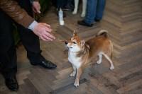 Выставка собак в Туле, 29.11.2015, Фото: 13