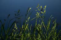 Летний день в Ясной Поляне, Фото: 41