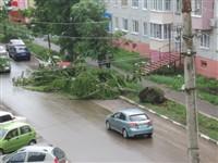 Ураган в Ефремовском районе, Фото: 1